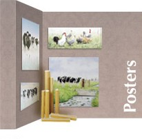 Posters, koeien, platteland, paarden, woerden, Kamerik, gouda