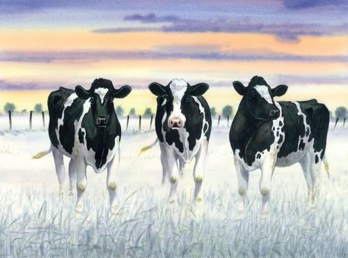 Poster, koeien, luchten, wolken, weiland