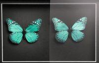 Ontspiegeld glas voorbeeld met vlinders